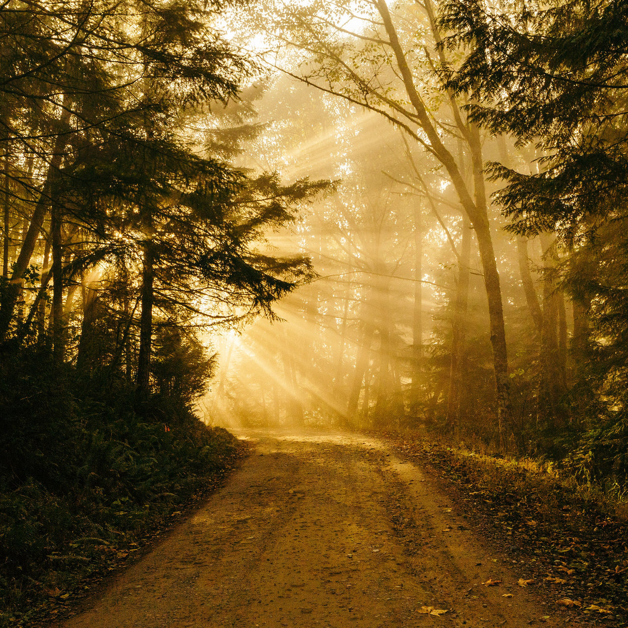 A literary journey, light shining through trees on forest path